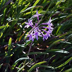 Roseville_Flower_2021-0183.jpg