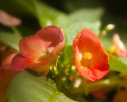 Stanford_Shopping_Center_Flowers_0034.jpg