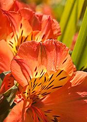 Stanford_Shopping_Center_Flowers_0253.jpg