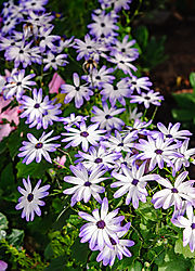 Stanford_Shopping_Center_Flowers_2012-0023.jpg