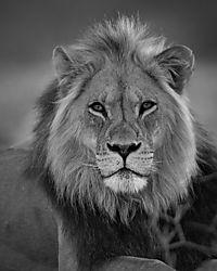 apr2020-wildlife-mikex4.jpg