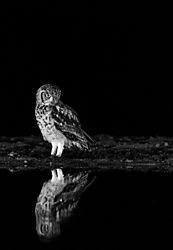 february2020-wildlife-topper1946.jpg