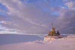 january2019-landscape-nikocarol.jpg