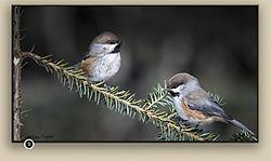 july2020-wildlife-ChristianF.jpg