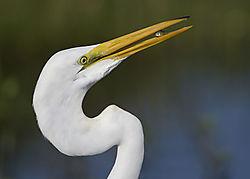 july2020-wildlife-bayouboy66.jpg
