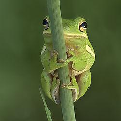may2020-wildlife-bayouboy66.jpg