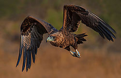 oct2020-wildlife-amorkel.jpg
