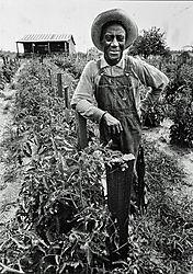 Blk_farmer_in_field.JPG
