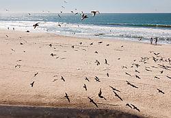 Half_Moon_Bay_Coast_Seagulls_People_2019-086.jpg