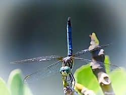 TST_2574_Dragonfly-Large.jpg