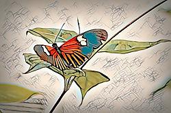 Butterfly_Flying_Pleasure.jpg