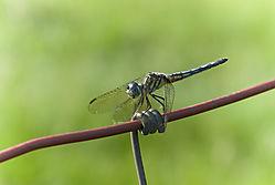 dragonfly42.jpg