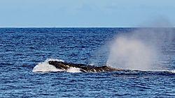 20200222-Maui-588.jpg
