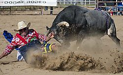 20170820_Bull_Fighting_and_Bull_Riding_0005.jpg