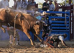 20170820_Bull_Fighting_and_Bull_Riding_0077.jpg