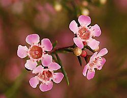 5215GtnWax-4_flowers.jpg