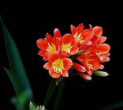 5215Orange-flowers.jpg