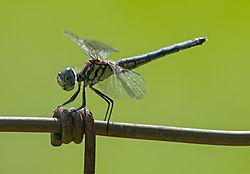 dragonfly112.jpg
