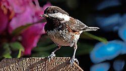 Sparrow-11.jpg