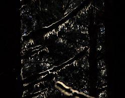 Trees-06.jpg