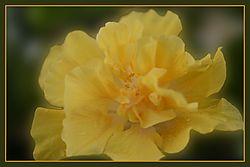 Flowers_0010.JPG
