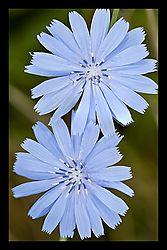 Flowers_0011.JPG