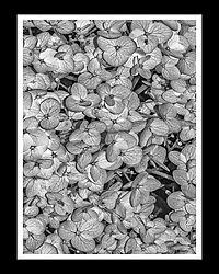 Flowers_0014.JPG