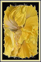 Flowers_0026.JPG
