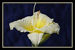 Flowers_0027.JPG