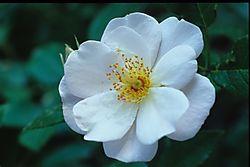 Flowers_0029.JPG
