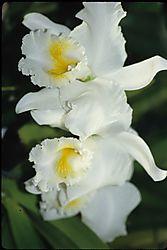 Flowers_00321.JPG