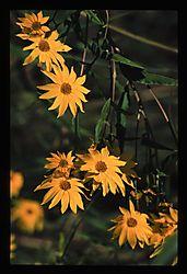 Flowers_0037_1.JPG