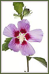 Flowers_0041.JPG