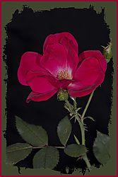 Flowers_0042.JPG
