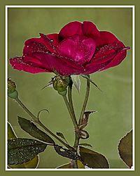 Flowers_0043.JPG