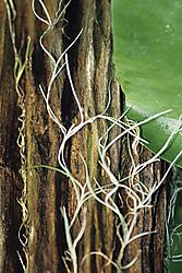 Tree-001.JPG