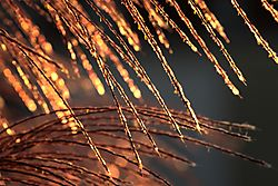 September_19_2020_Seagrass_Fire1.jpg