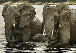 04-apr2021-wildlife-ek44.jpg