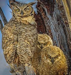 05-may2021-wildlife-HAW3.jpg