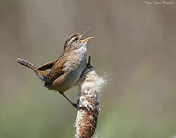 06-june2021-wildlife-CRHGallagher.jpg