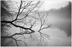 1091Fog_Branch.jpg