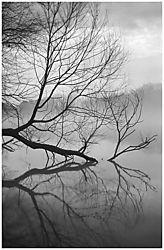 1091vFog_Branch.jpg