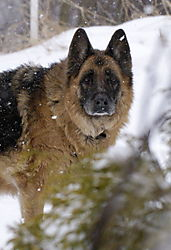 15219Hala_and_snow08-31.jpg