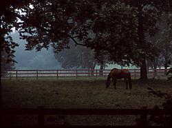 4921misty-horse-bobgall.jpg