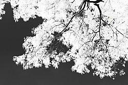 5371IRtrees2.jpg