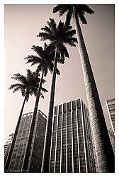 778503-112_26_Sao_Paolo_Cityscape.jpg