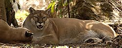 5736Cougar_Rest_Net.jpg