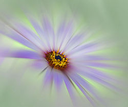 16563flower2.jpg
