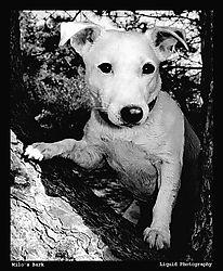 19354Milos-Bark-II.jpg