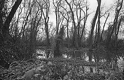 219swamp.jpg